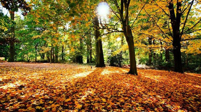 Парк усыпанный золотыми листьями