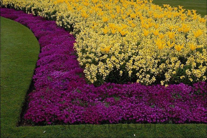 Монохромные сады  в красочние