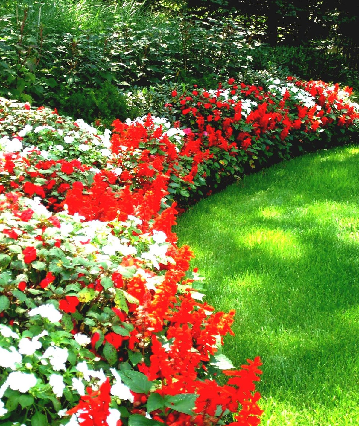 Бордюры из цветов фото