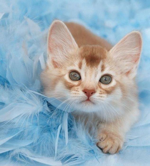 Любимого мужа, открытка с котом фото