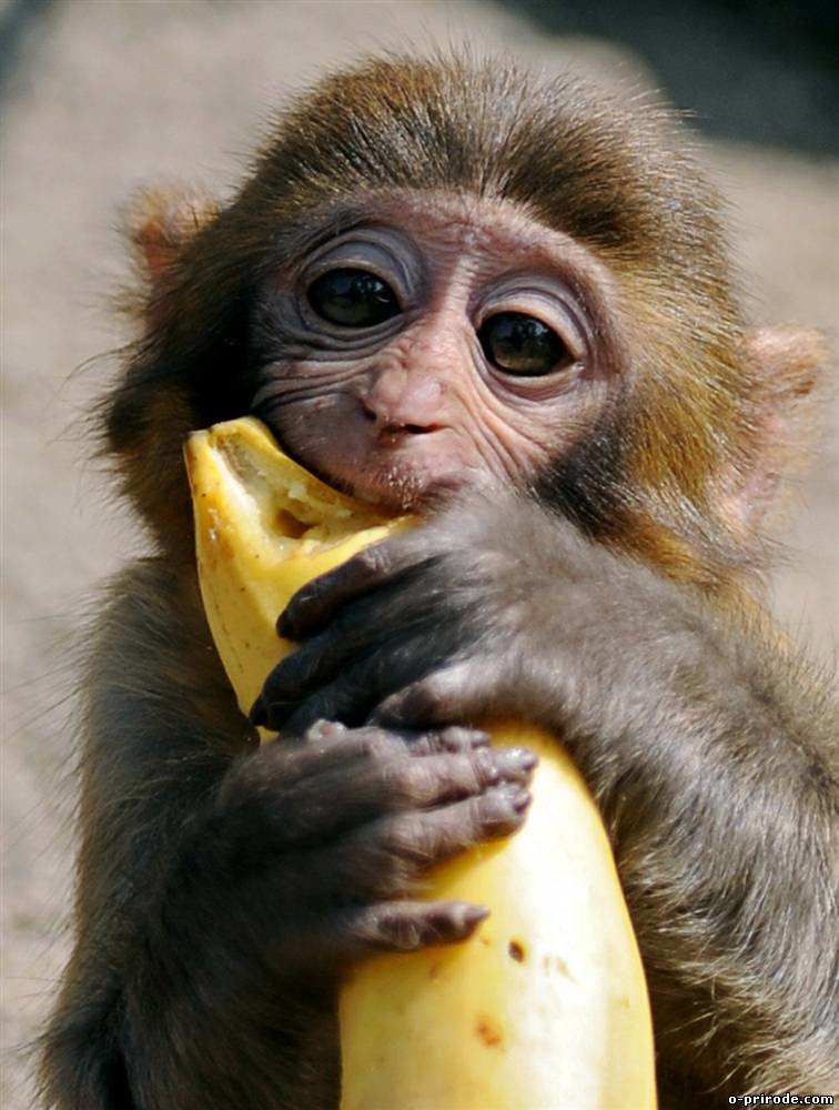 Картинки обезьяна с бананом