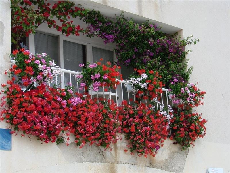 """Маленький сад на балконе"""" - карточка пользователя a020681 в ."""