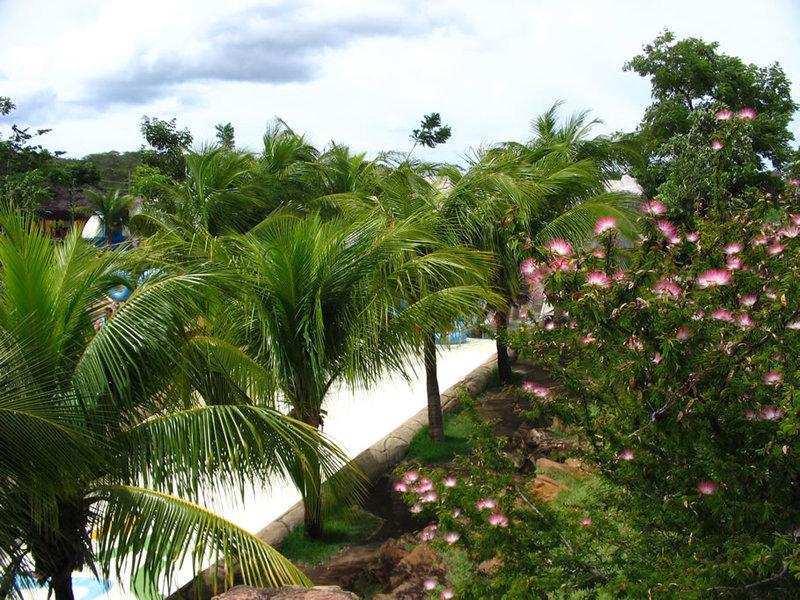 Природа Бразилии пальмы