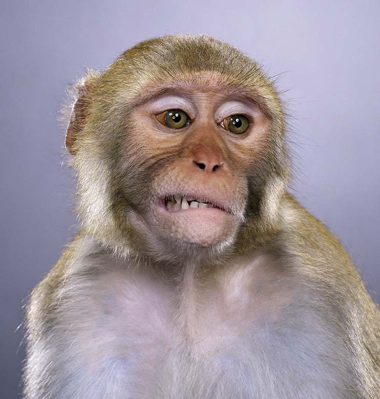 Работа приколы картинки обезьяны, медицине