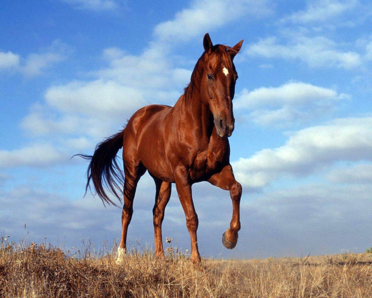 Картинка с изображением лошади, рекламные открытки скучаю
