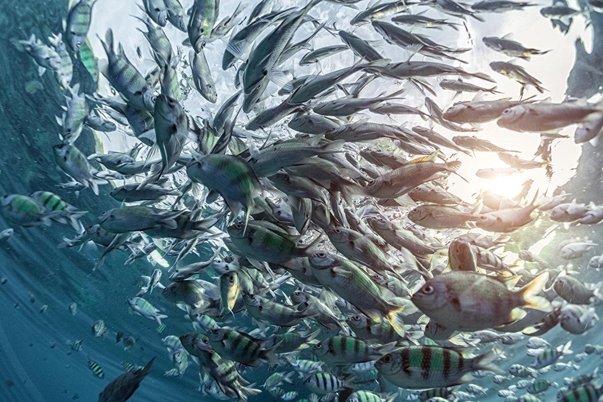 картинки стаи рыбок под водой тайну рассказали мне его разновидности встречаются