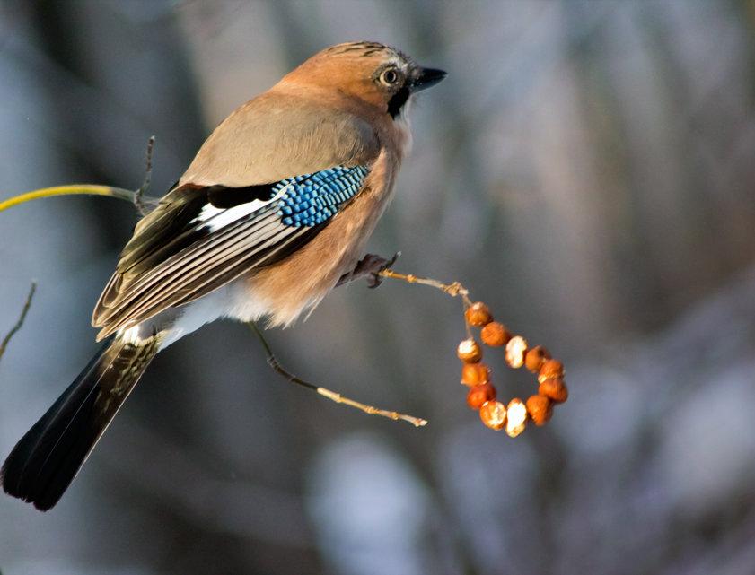 лесные птицы средней полосы фото с названиями из-за деревьев выглядывает