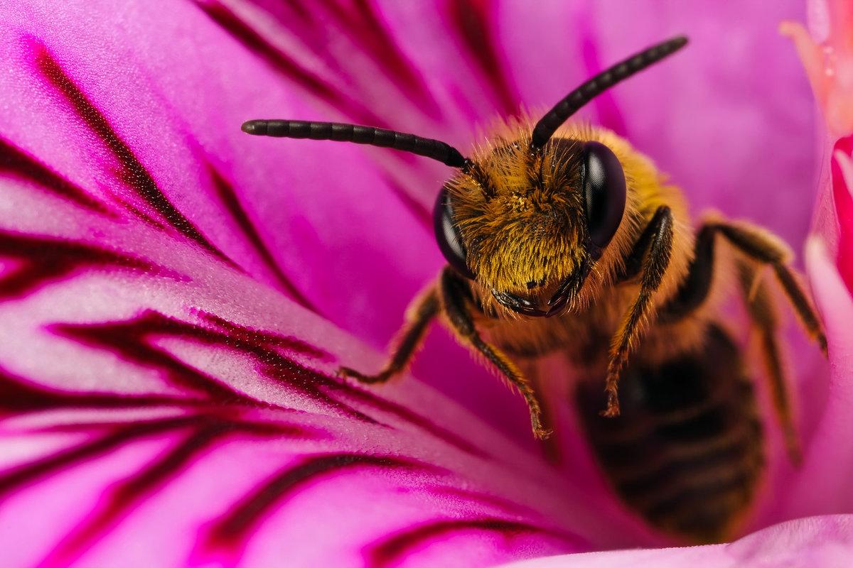 Пчела красивые картинки, открытки друзьями