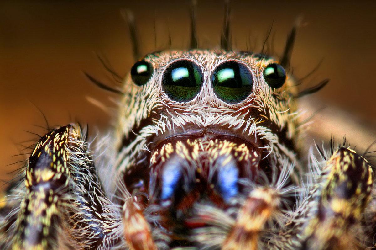 Классные картинки пауков
