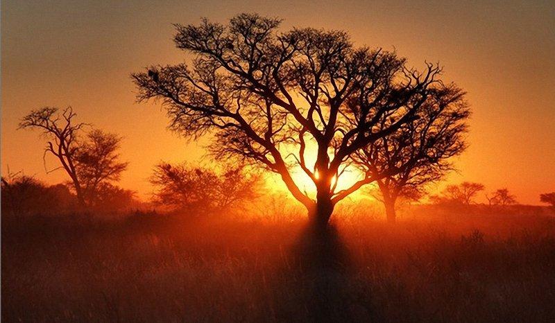 Вечерние деревья