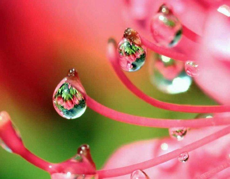Картинки капельки росы на цветах
