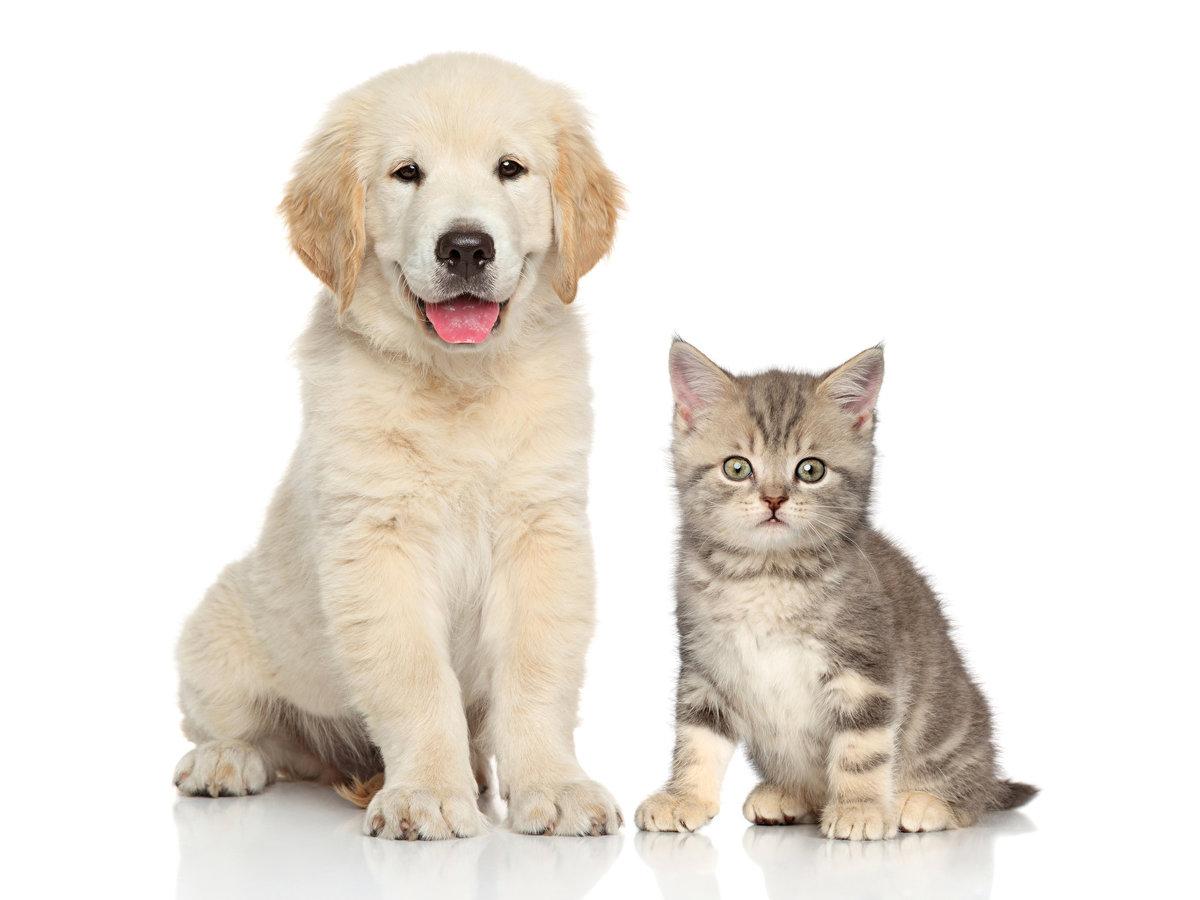 Щенок и котенок