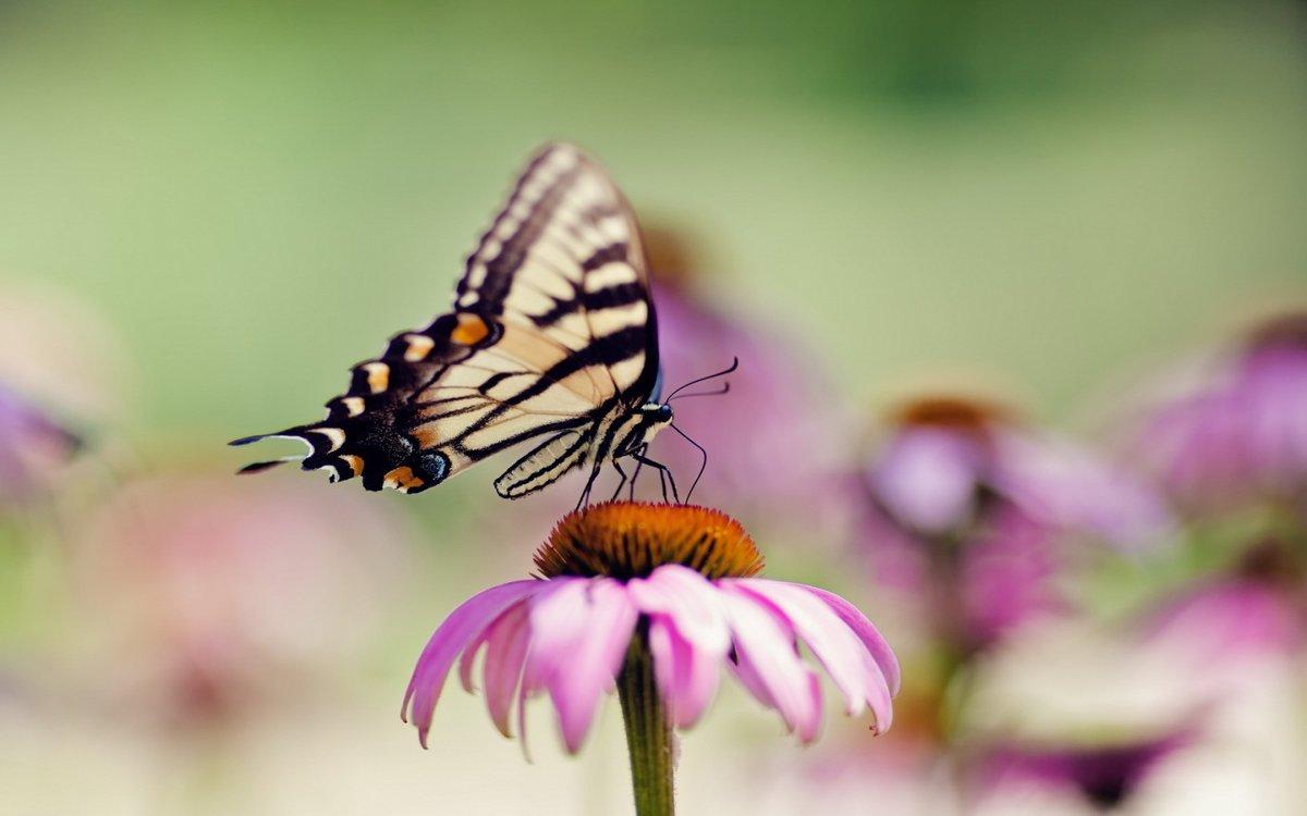 Обои для рабочего стола скачать бесплатно бабочка