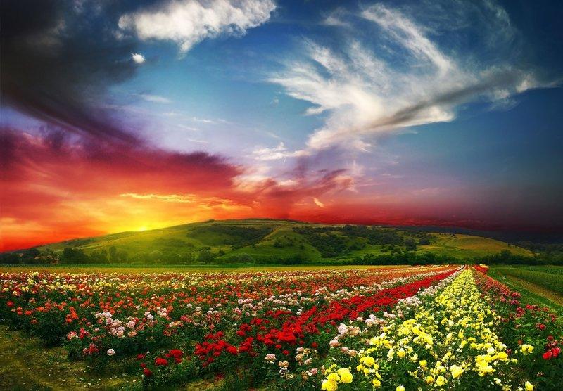 лето прекрасное цветы