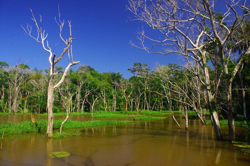Природа Бразилиисветлот и я рко