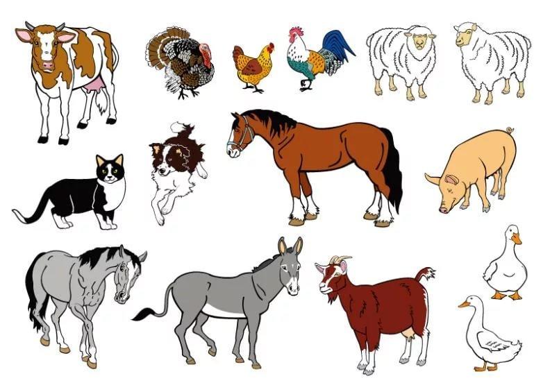 свадебный картинки коровы льва кошки собаки лошади марсианские