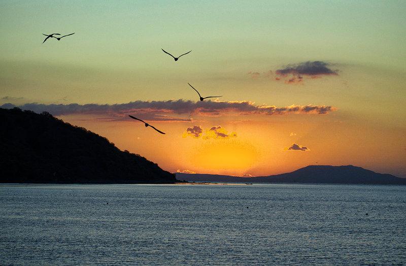 Чайки над морем на фоне рассвета.