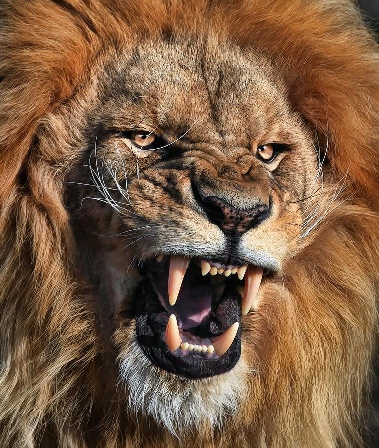 Классные картинки львов, картинка отдыхающих море