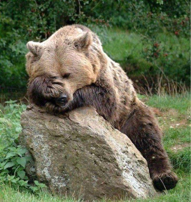 Прикольный картинки про медведей