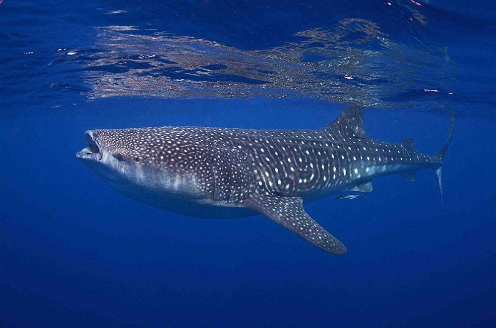 ряд самые крупные рыбы в мире фото самых развивающих полезных