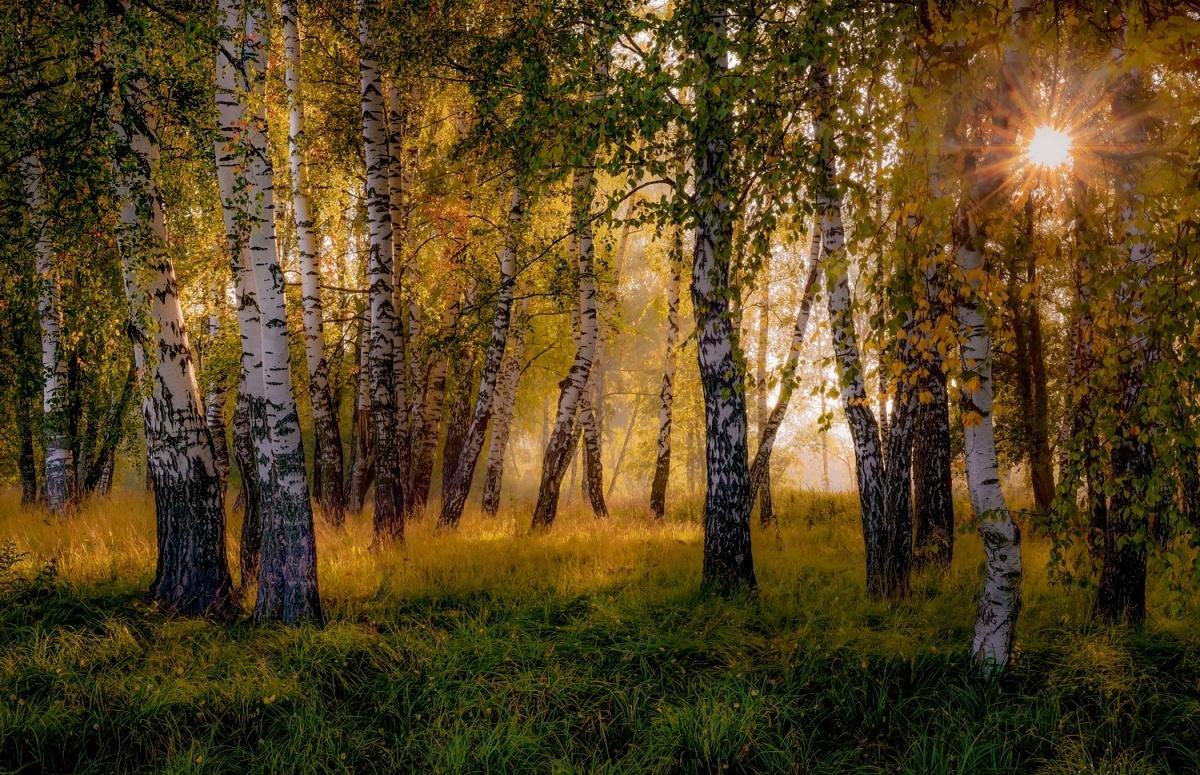 Картинки русской природы красивые, открытка