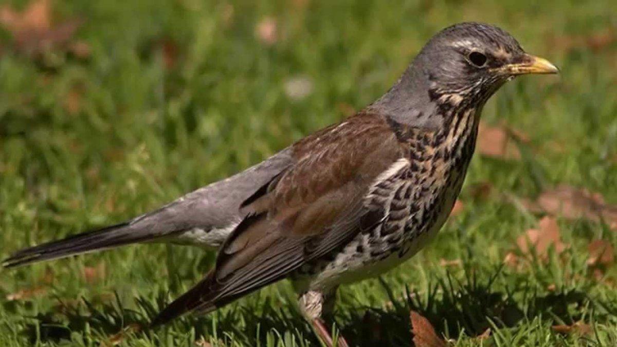 что за птицы появились в москве фото сергей разных странах