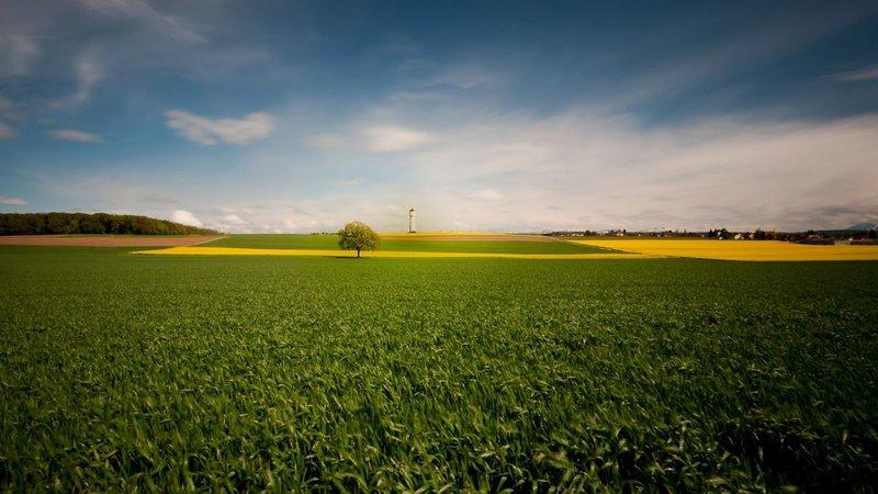 Красивое поле,маяк  и дерево