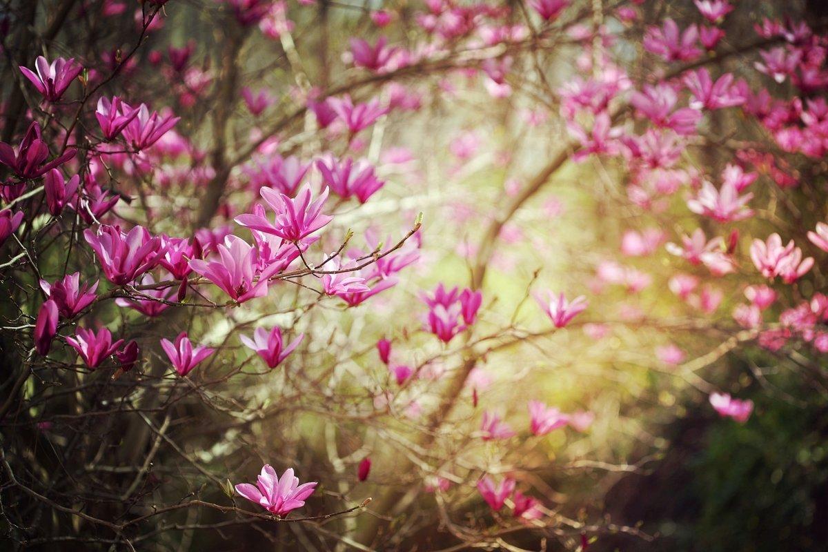 Месяцами, весна картинки фото
