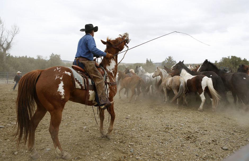Лошадь и пастух картинки