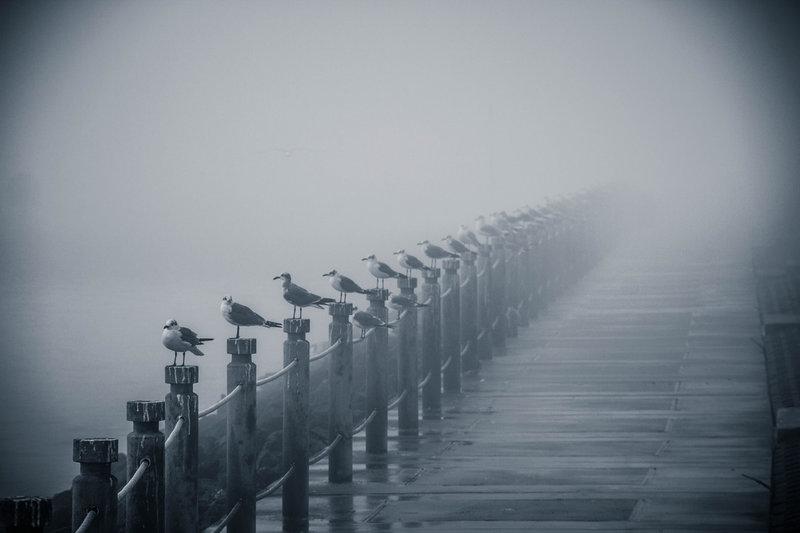 туман великолепно подчеркнул глубину