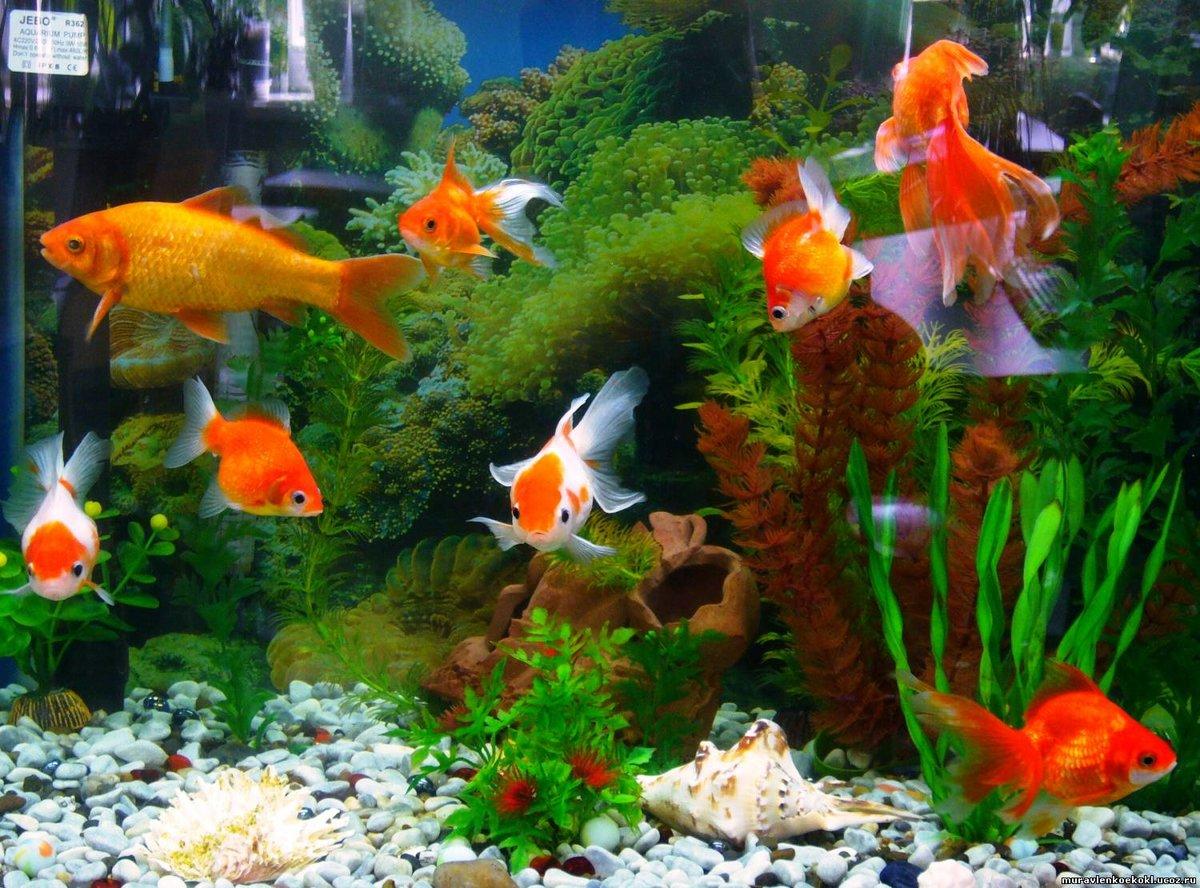 Картинки всех рыбок в аквариуме фото рассказы
