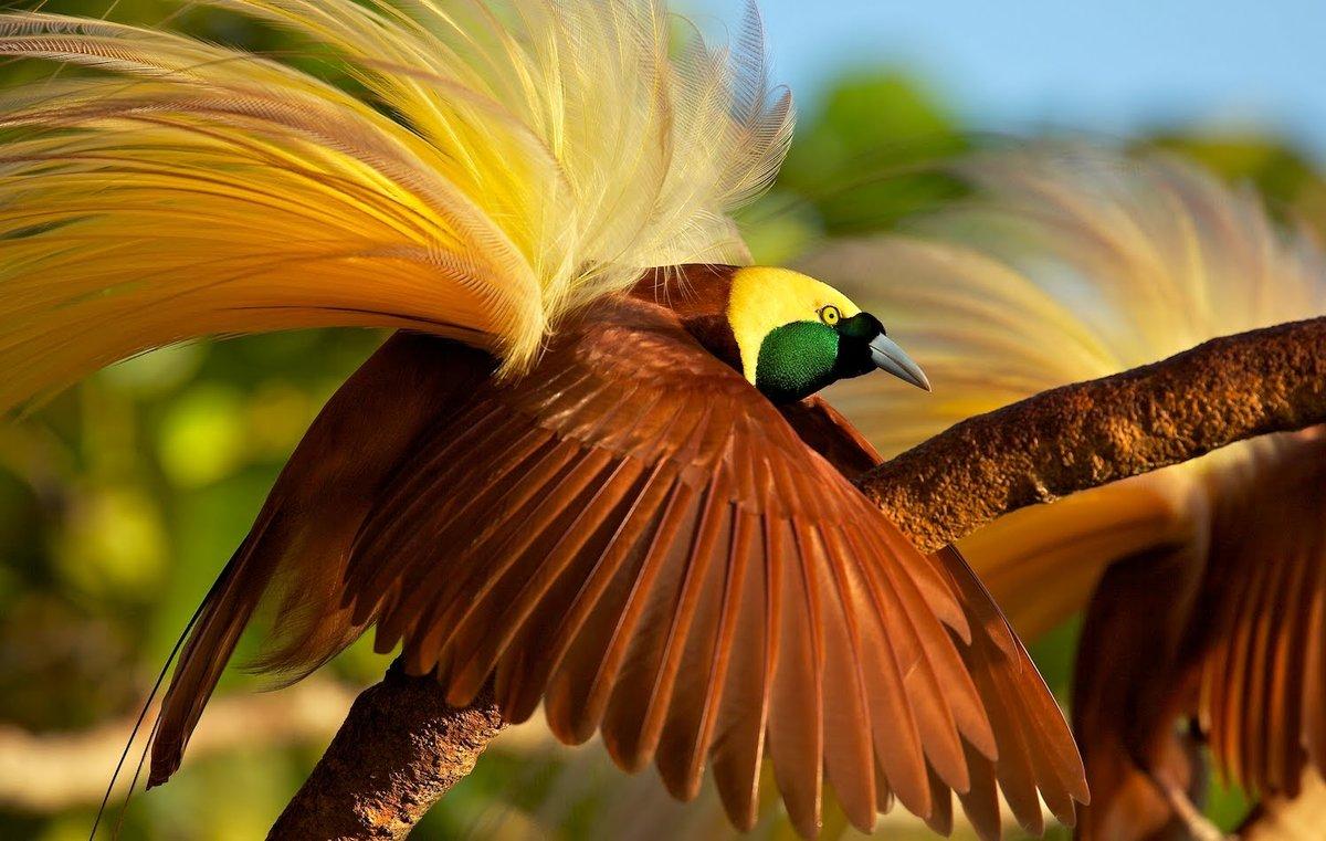 Картинки удивительное рядом птицы, старом новым