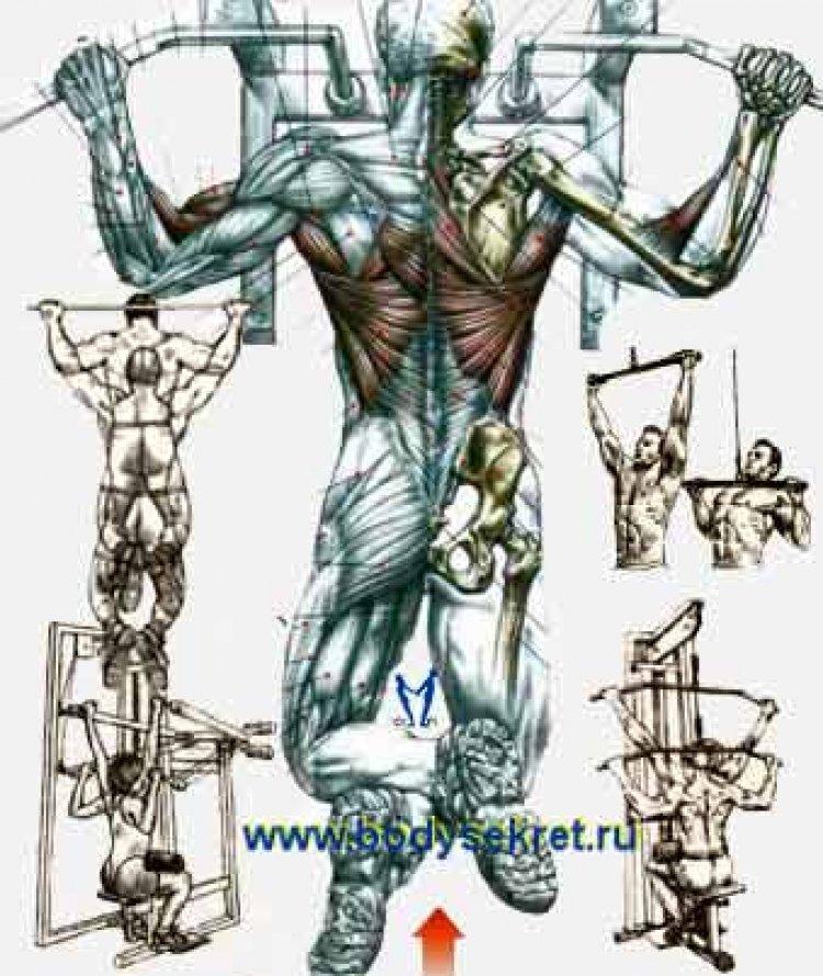 Тренировки тела (полноценная тренировка спины )