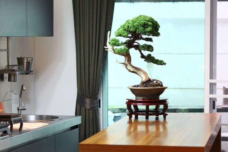 Миниатюрное дерево бонсай - акцент интерьера.