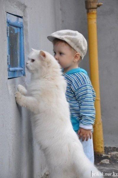 малыш с котом наблюдают в окно