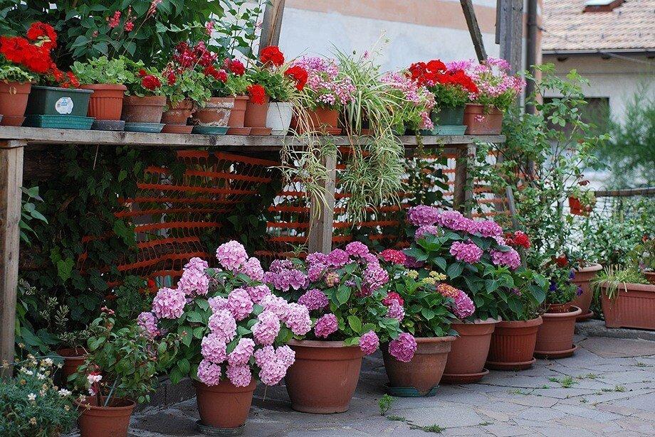 украшение двора цветами фото является