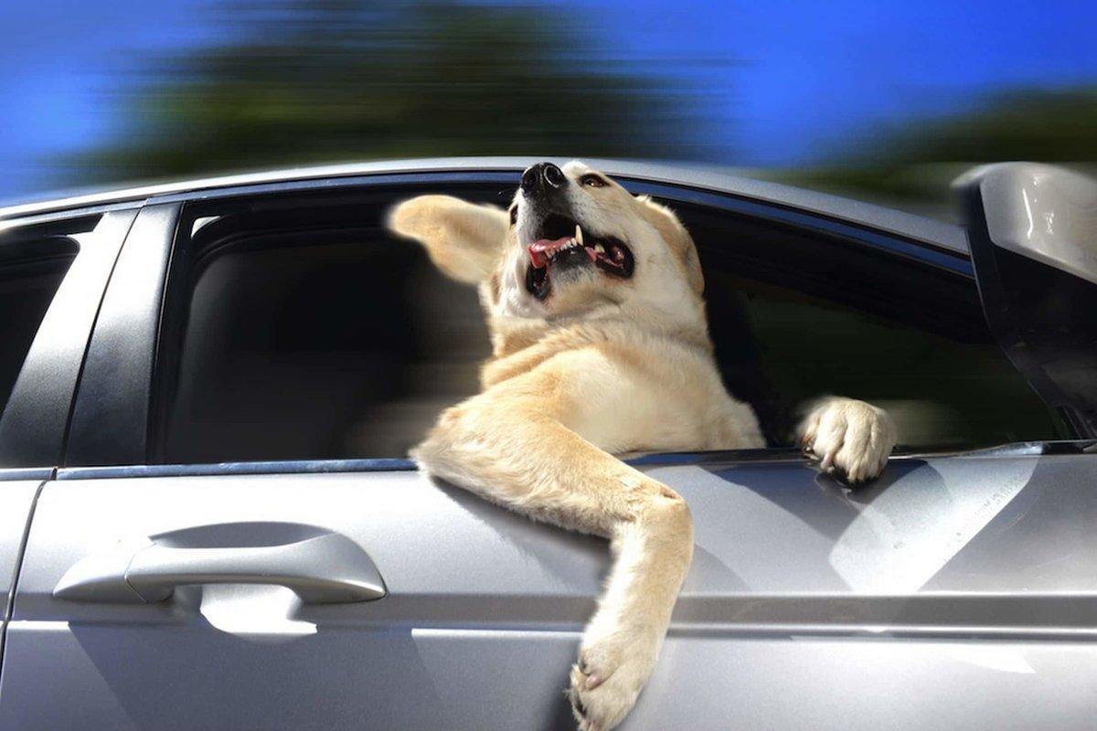 Картинка, смешные картинки еду на машине