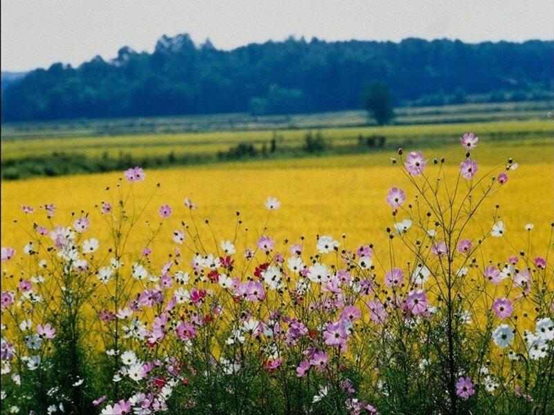 лето прекрасное шикарно