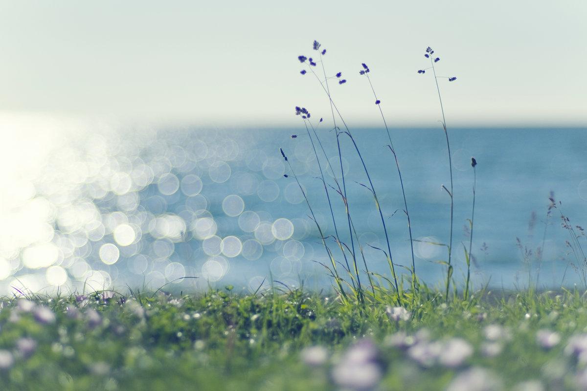 Пожелание доброго, картинки свежесть природы