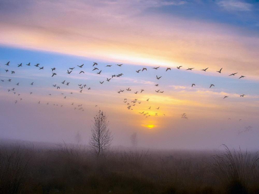 к чему снится стая птиц над головой гексикон при