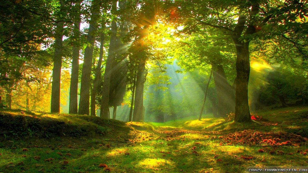 Forest Wallpapers HD A34 - HD Desktop