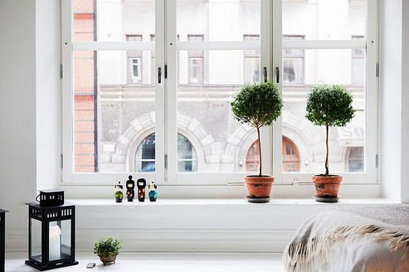 Комнатные растения не только дарят нам положительные эмоции, но и выгодно подчеркивают стиль интерьера.