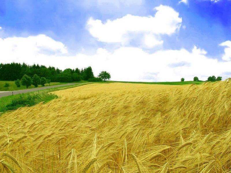 Плейкаст «Русское поле» Русское поле Русское поле