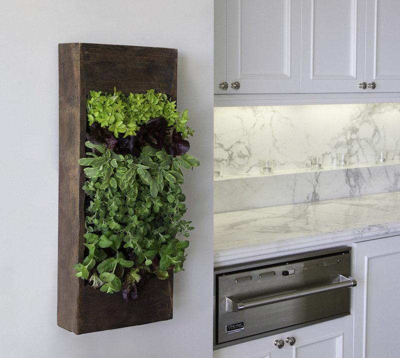 Небольшое вертикальное озеленение на кухне