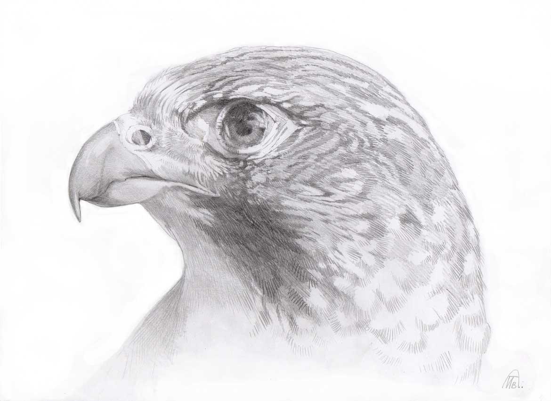 картинки диких птиц простым карандашом этот