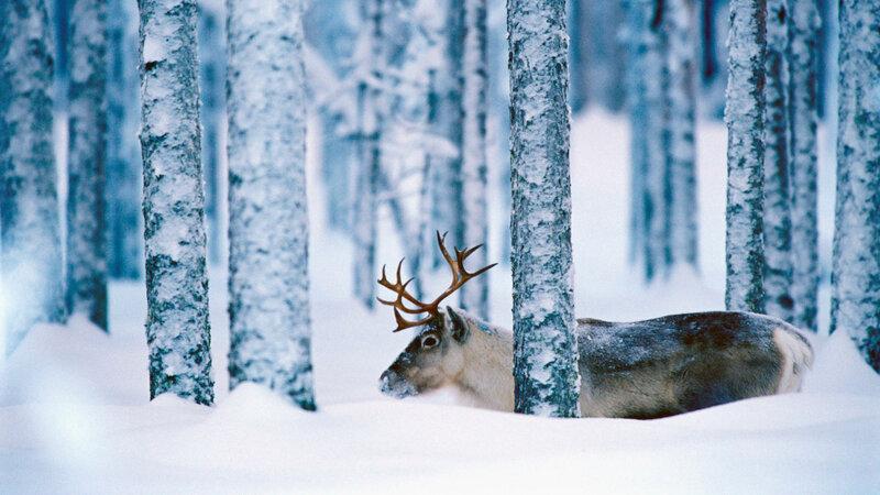 Посмотрите фото Швеции зимой - таинственная природа, красивые улочки, фонарики и просто сказка. Швеция очень красива и загадочна одновременно.