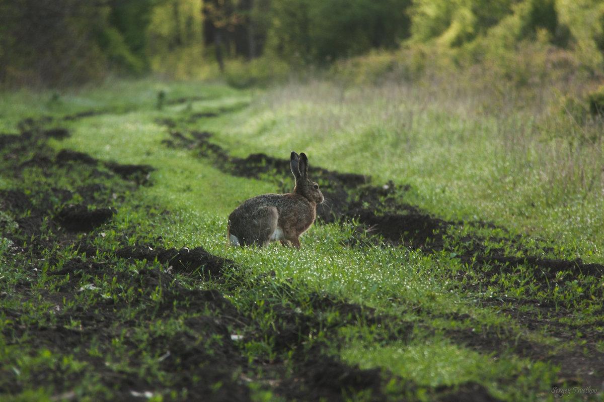 Заяц фотосъемка уфа