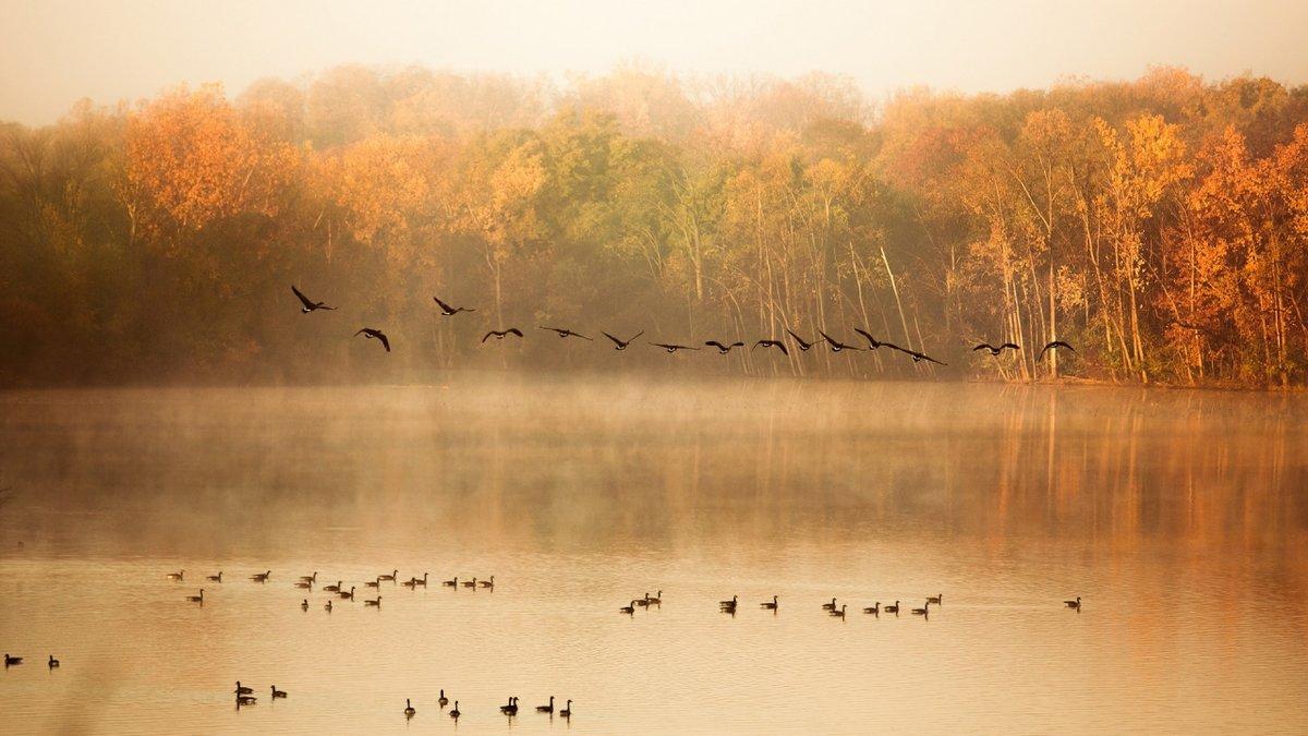 Птицы улетающие на юг в тумане.