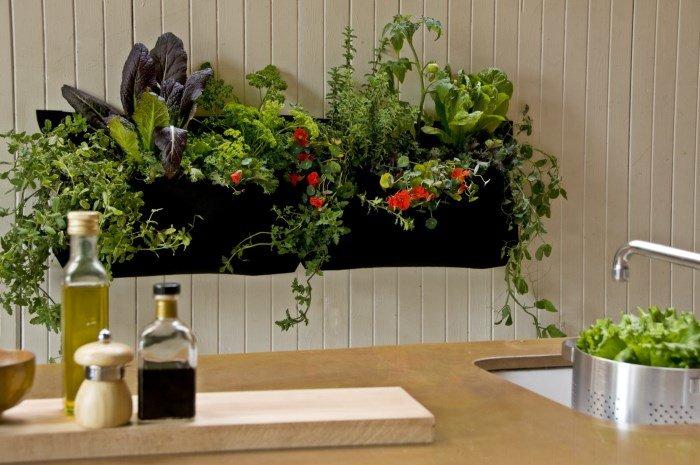 В условиях кухни хорошо растут такие цветы, как калатея, монстера, хлорофитум, драцена и многие другие. Очень красиво смотрятся в интерьере цикламен и гибискус.