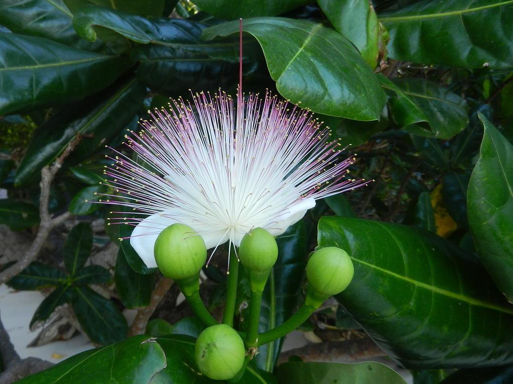 достопримечательности нальчика растения тайланда фото и названия следующий день после